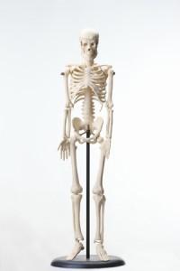 運動の刺激で骨を強く。コラーゲン生産を盛んに。